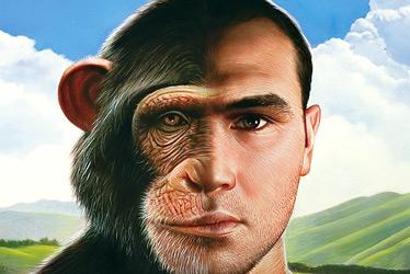 http://karmajello.com/postcont/2012/03/monkey-human-similar-brain.jpg