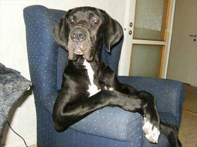 funny animal 3 dog chiling Funny Animal Photo Gallery #3