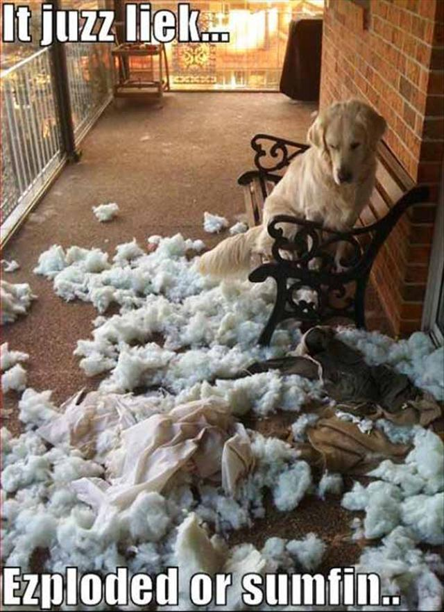 funny animal 3 dog mess Funny Animal Photo Gallery #3