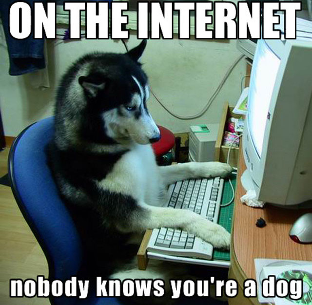 funny animal 3 husky internet Funny Animal Photo Gallery #3