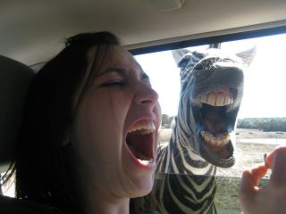 funny animal 3 zebra mouth Funny Animal Photo Gallery #3
