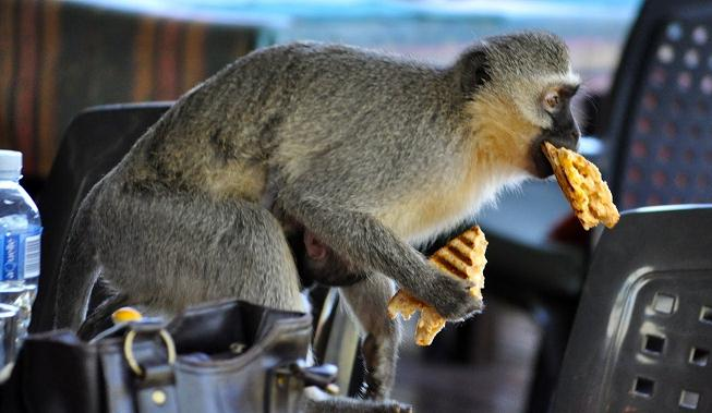 Funny Animals Stealing Food From People Compilation (Video ...