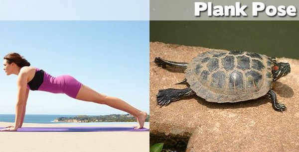 http://karmajello.com/postcont/2012/10/yoga-positions-demonstrated-by-animals-plank-pose.jpg