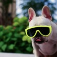 funny-animals-with-glasses-gallery-dog-3