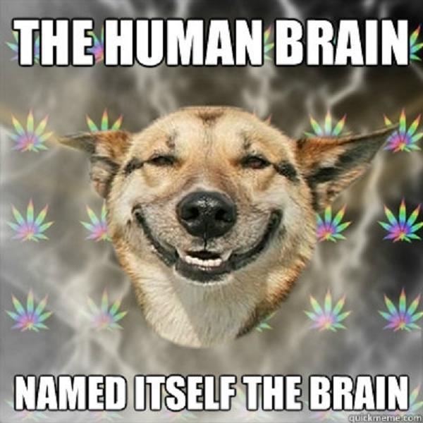 stoner-weed-meme-brain-dog