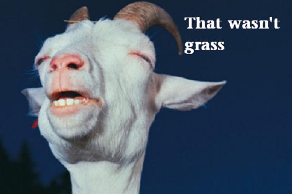 stoner-weed-meme-stoned-goat
