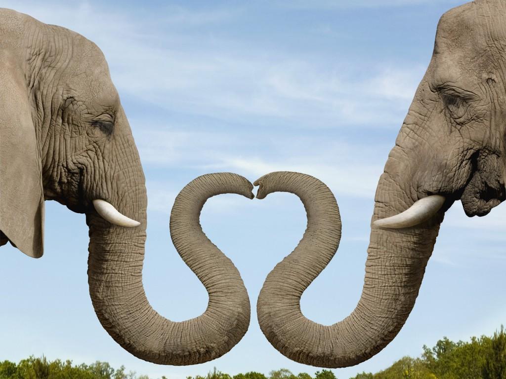 elephants-rhcom6