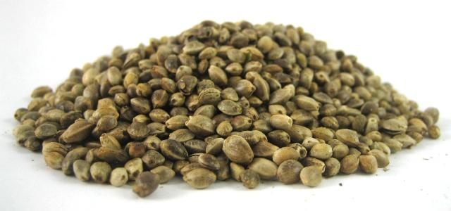 HempSeeds3 7 Ways Hemp Seeds Can Improve Your Health