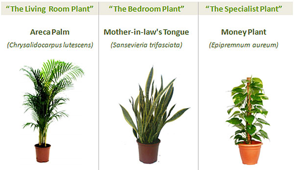 Garden nasa collection 8 Powerful Plants That Detox the Air in Your Home (Guide)